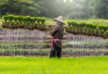 Oxfam Formally Launches Blockchain Platform for Rice Farmers in Cambodia