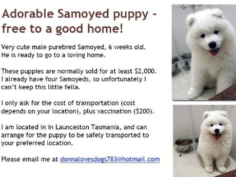 Scammers often use picture of pedigree breeds to lure people in. Picture: Consumer Affairs Victoria