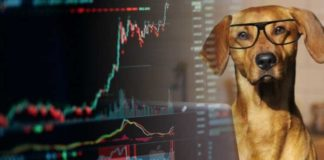 A-Bitcoiners-Best-Friend-The-Crypto-Dog - A-Raging-Bull-Market-Could-Bust-Out-with-Recent-Trading-Volumes